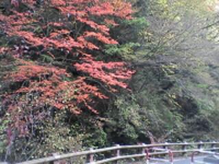 紅葉(月夜平大橋~不動滝)