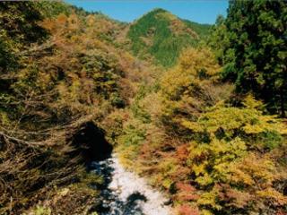 紅葉(早木戸川)