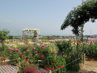 アイリス園(豊丘村)