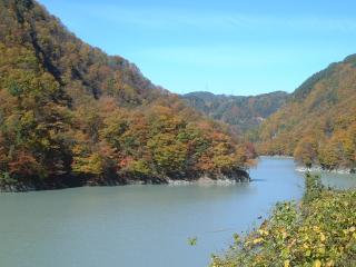 紅葉(大鹿村全域)