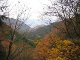 紅葉(大平・大平街道・県民の森)