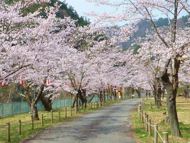 中部電力の松島桜公園(天龍村)