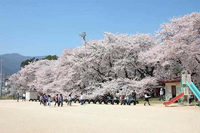 高森南小学校の桜(高森町)