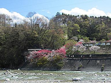花桃(月川温泉郷・阿智村)