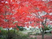 紅葉(風越山・虚空蔵山・野底山森林公園)