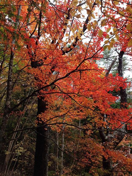 小川路峠の紅葉