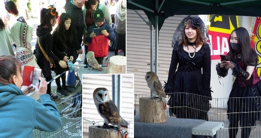 ⑦ 11-3 動物園 241-3