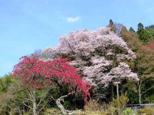 4-12 ⑦八王子神社 82