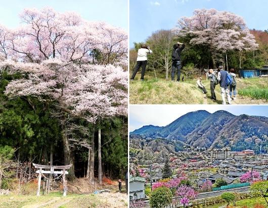 4-12 ⑧八王子神社 87-3
