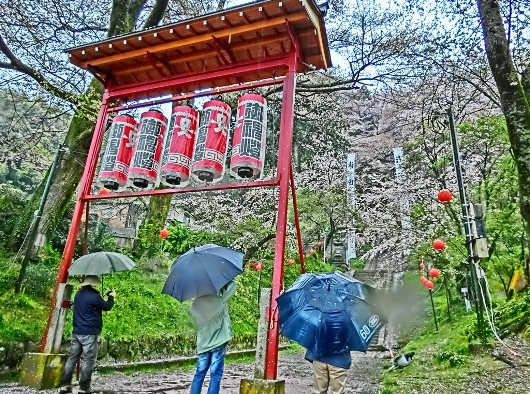 4-7 ④雨の石段桜 34