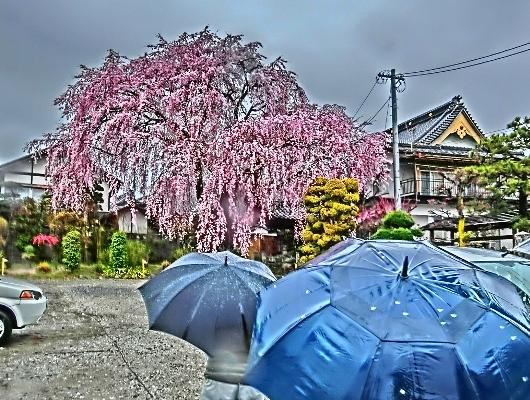 4-7 ⑨雨の黄梅院 59
