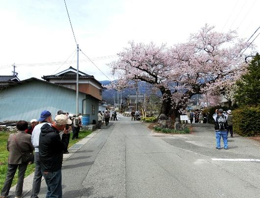 4-8 ⑪原田の桜 97