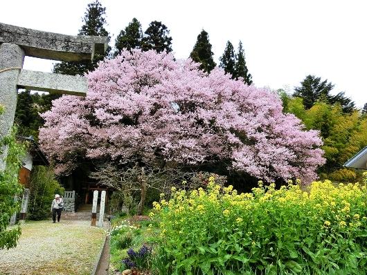 4-8 ⑮子安神社 149