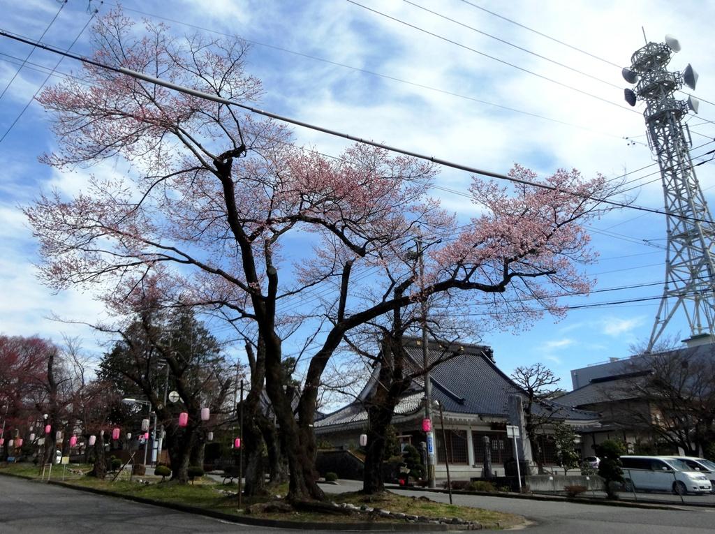 3-26 桜並木のエドヒガン 078