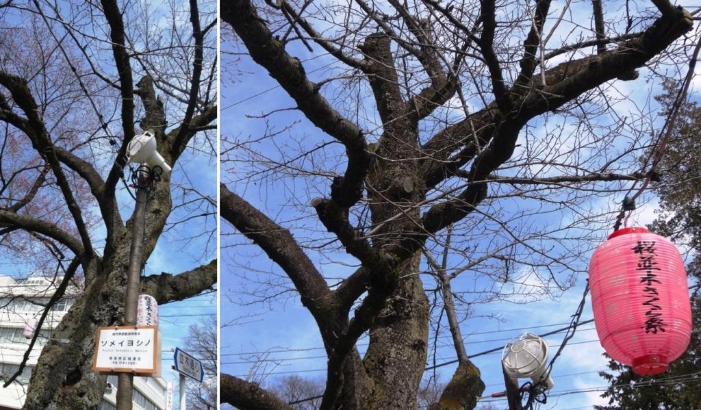 3-26 桜並木 081-2