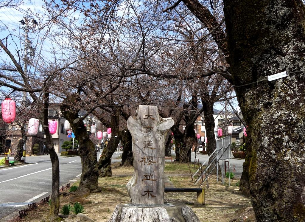 3-26 桜並木 096