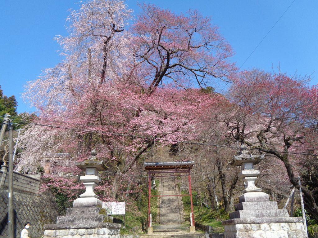 飯沼 諏訪神社(縮小)