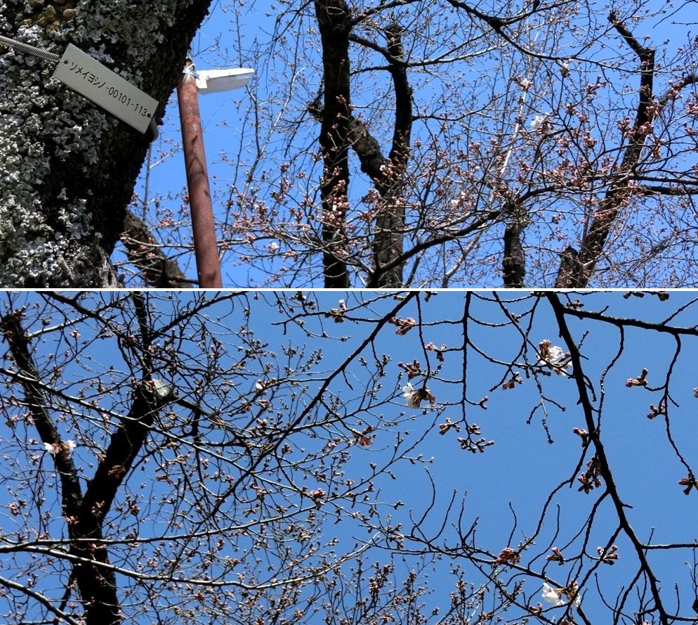 3-26 桜並木 894-2