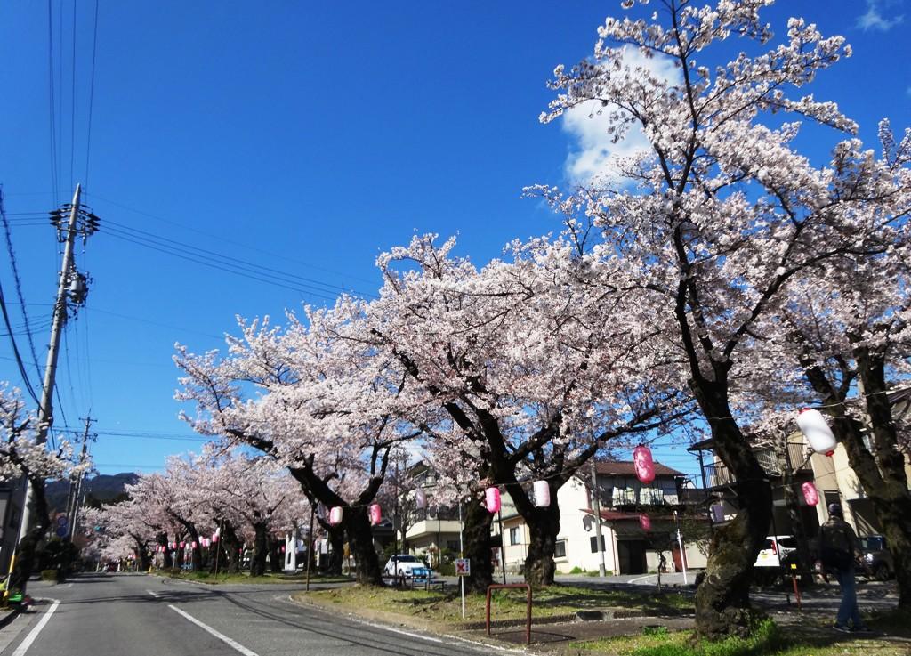 4-10 桜並木 255
