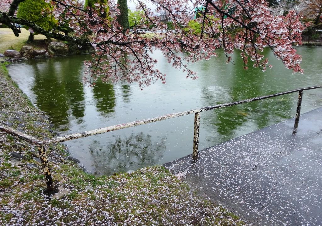 4-13 雨の松川プール 308