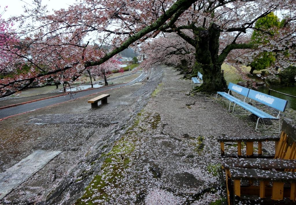 4-13 雨の松川プール 309