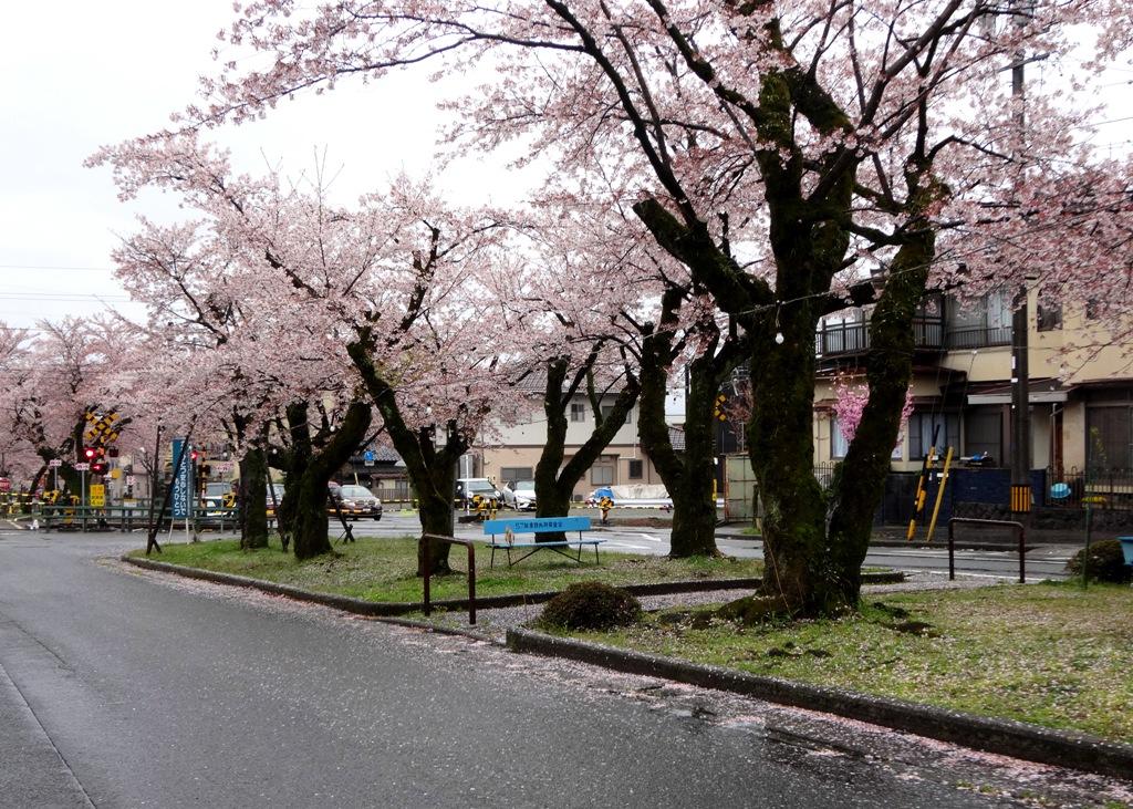 4-13 雨の桜並木 289