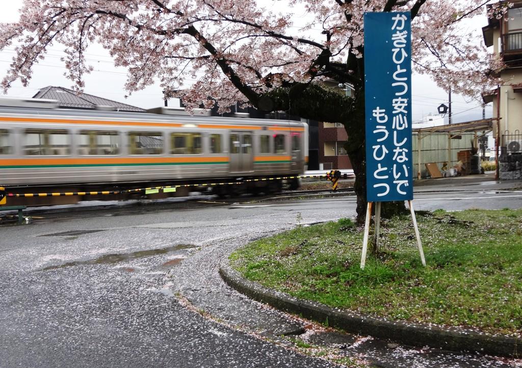 4-13 雨の桜並木 292