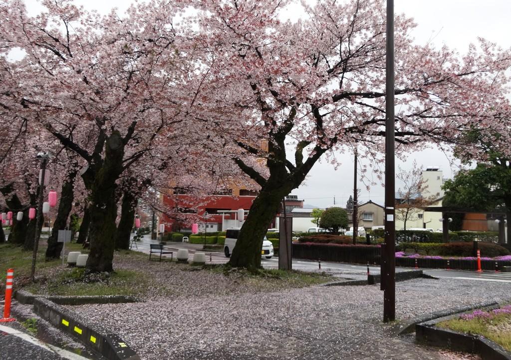 4-13 雨の桜並木 296