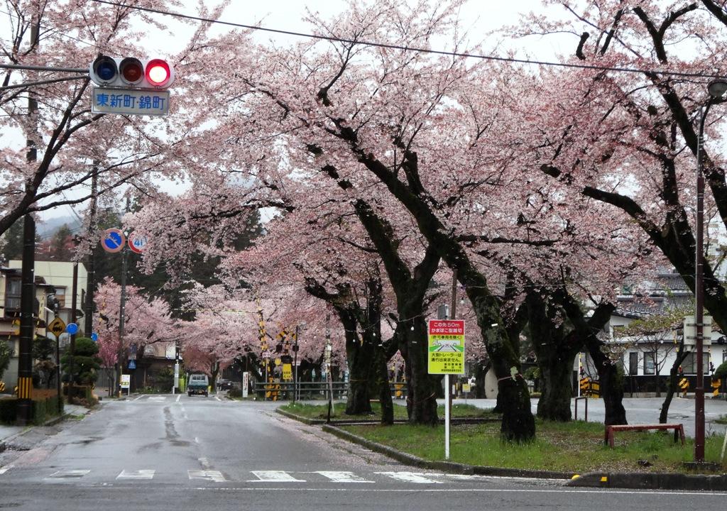 4-13 雨の桜並木 319