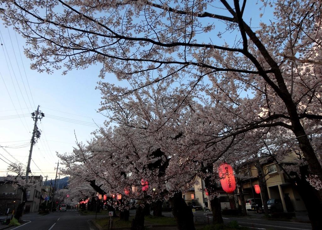 4-7 桜並木 237