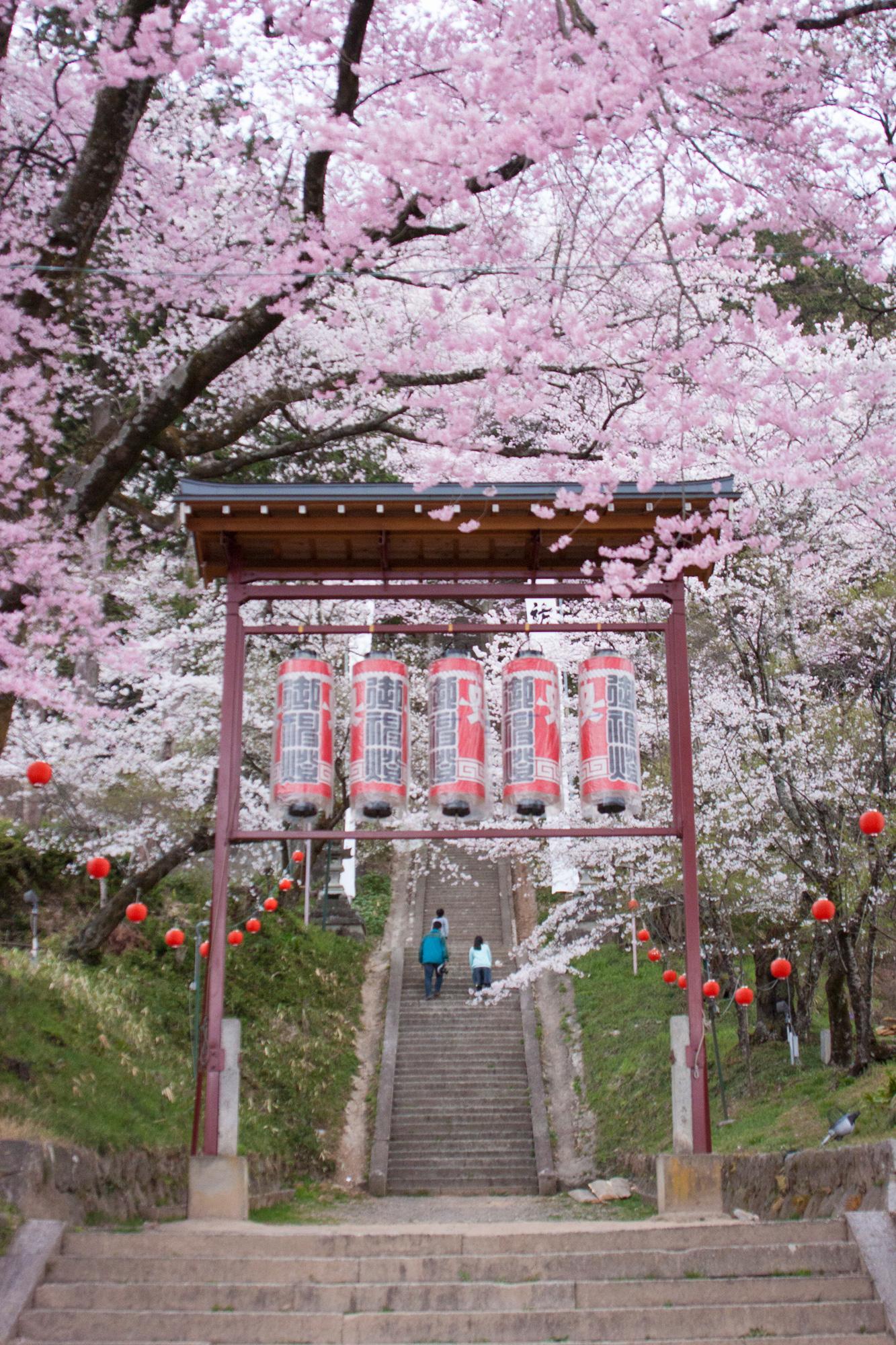 飯沼諏訪神社の石段桜(飯田市)