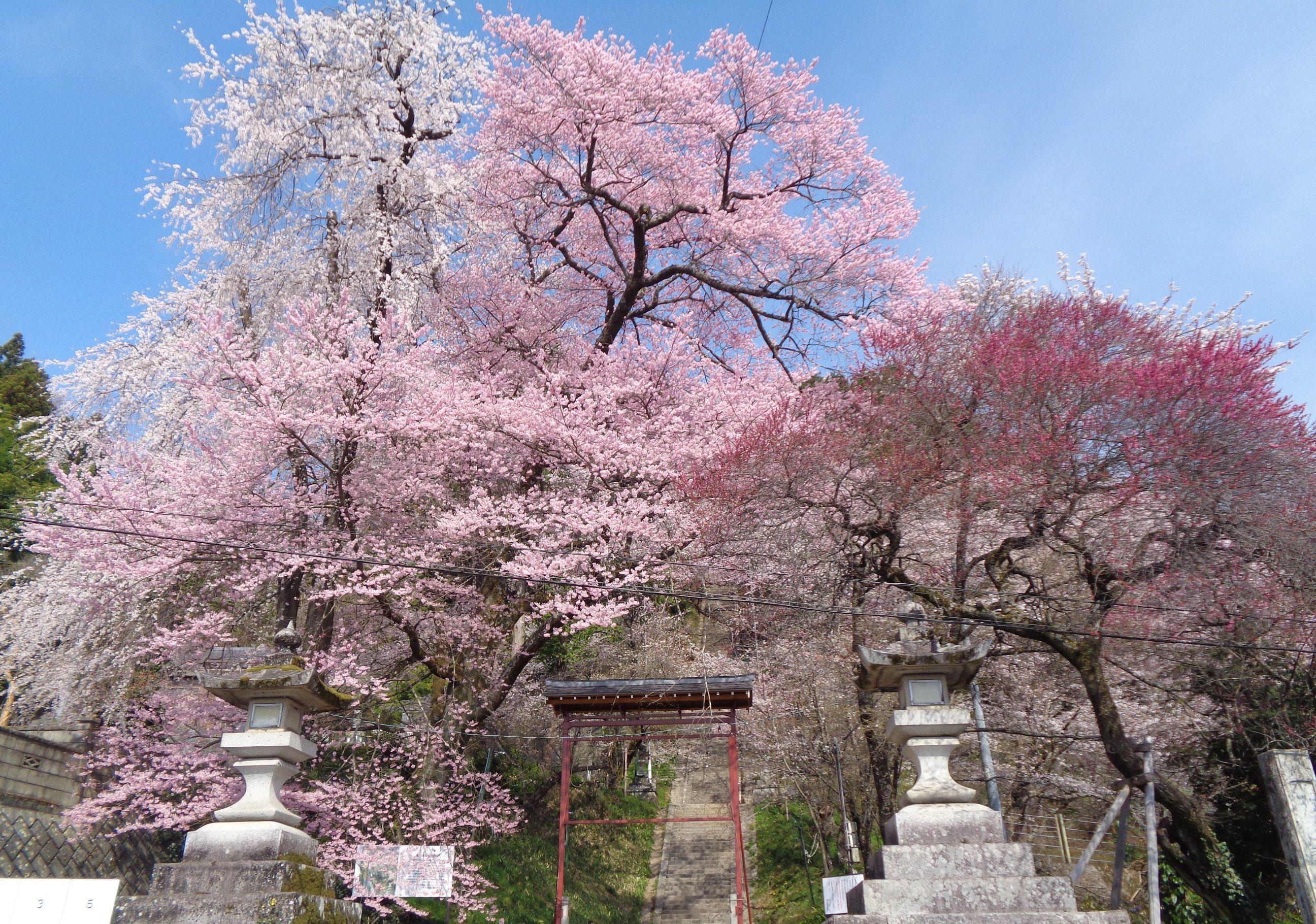 0327飯沼神社