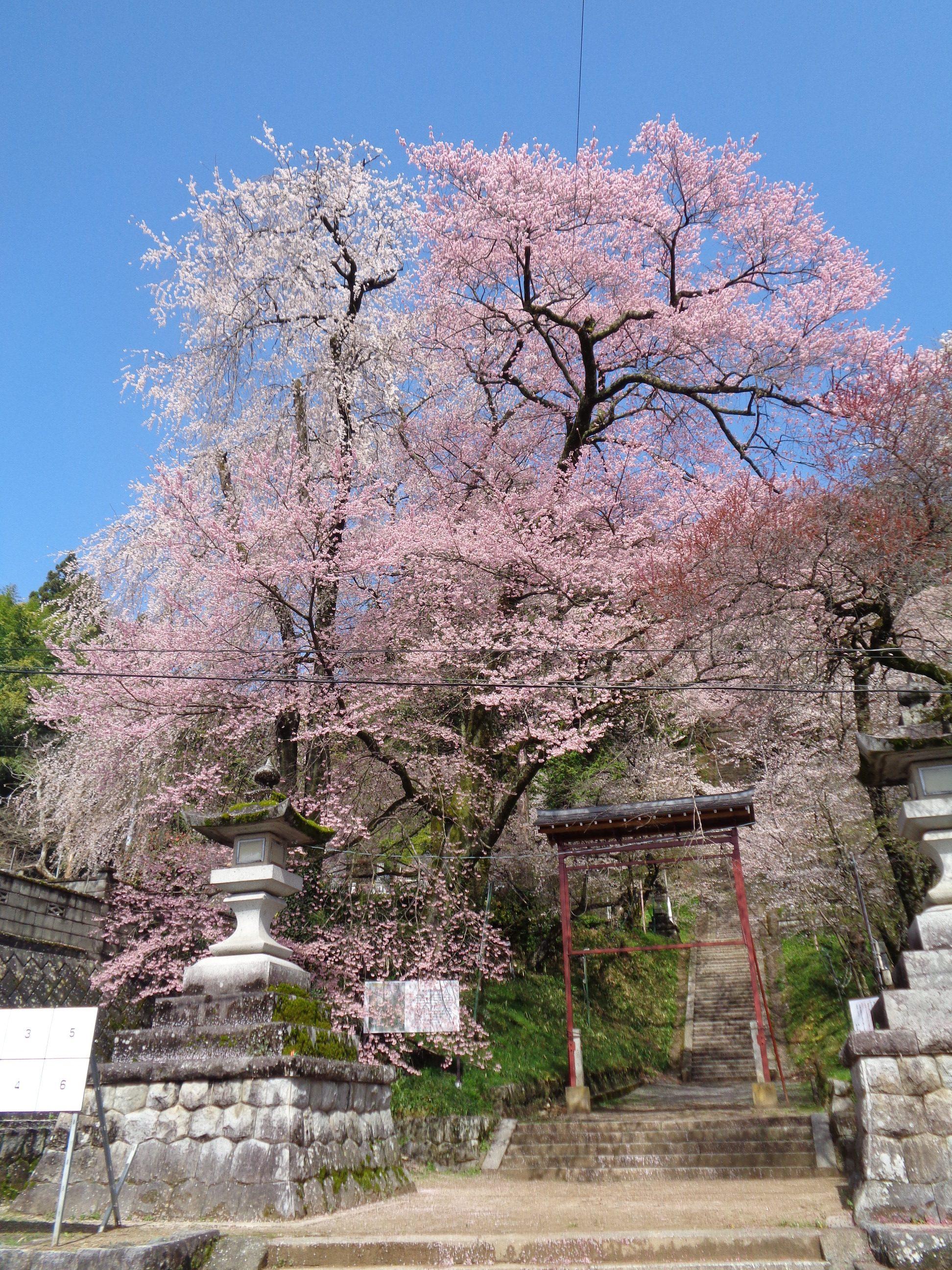0329飯沼神社